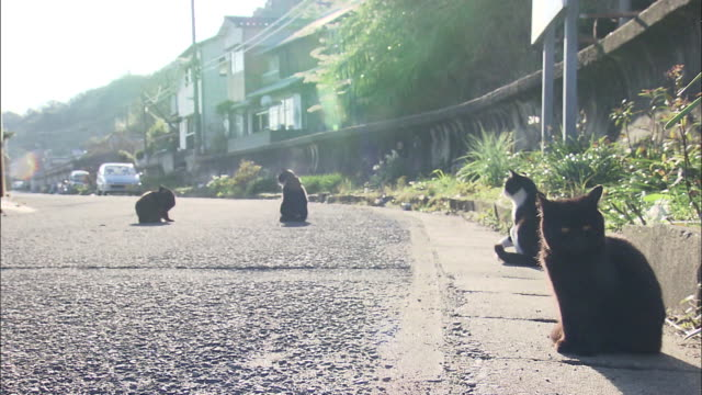 Four cats lolling on a street,Ainoshima,Fukuoka,Japan