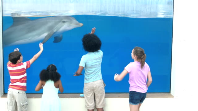 vídeos de stock e filmes b-roll de four children at aquarium viewing dolphin underwater - 14 15 years