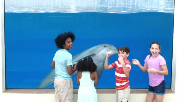 vier kinder im aquarium anzeigen delphin unter wasser - 12 13 years stock-videos und b-roll-filmmaterial