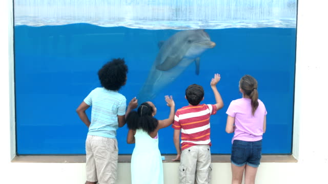 four children at aquarium viewing dolphin underwater - stunt stock videos & royalty-free footage