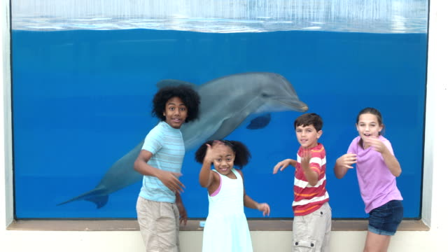vídeos de stock, filmes e b-roll de quatro crianças no dolphin de visualização do aquário subaquático - 12 13 years