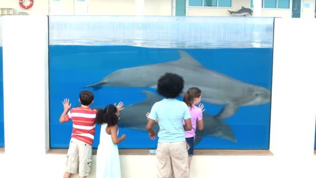 vídeos de stock e filmes b-roll de four children at aquarium viewing dolphins underwater - 14 15 years