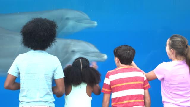 vier kinder im aquarium anzeigen delfine unter wasser - 12 13 years stock-videos und b-roll-filmmaterial