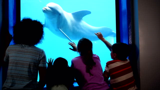 four children at aquarium viewing dolphins underwater - captive animals stock videos & royalty-free footage