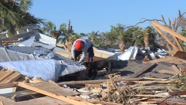 four days after hurricane michael wiped out mexico beach in florida rescue teams with sniffer dogs are searching for possible victims buried under... - rubble bildbanksvideor och videomaterial från bakom kulisserna