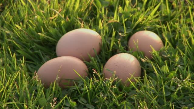 vídeos de stock e filmes b-roll de cu, four eggs in grass, ireland - quatro objetos