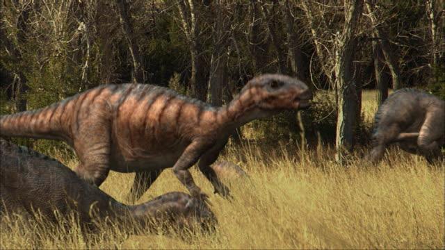 cgi, ms, four eoraptors grazing in field - eoraptor stock videos and b-roll footage
