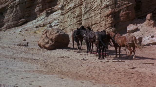 stockvideo's en b-roll-footage met ws four horses in desert - vier dieren