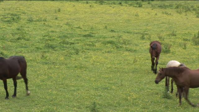 vidéos et rushes de ms, ha, four horses on field, kilkenny, ireland - petit groupe d'animaux