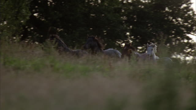 cu, pan four horses running on meadow - herbivorous stock videos & royalty-free footage