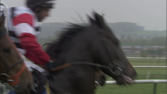 slo mo ms pan ws four jockeys on horses running out of gates at start of race at newbury racecourse / newbury, england, uk - newbury inghilterra video stock e b–roll