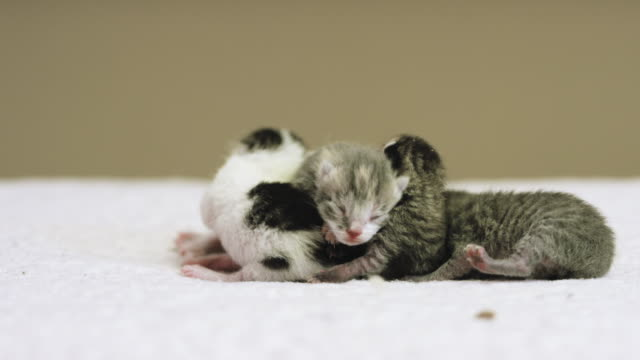 four kittens - soft blanket stock videos and b-roll footage