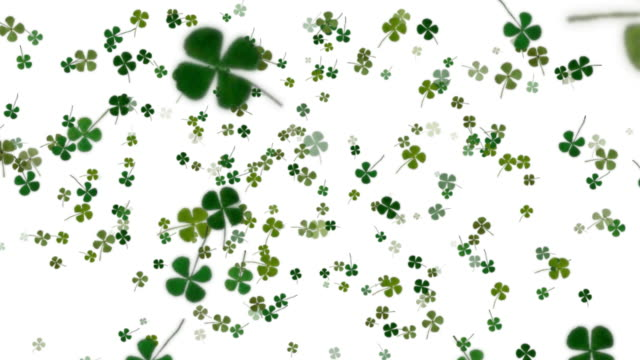 four leaf clover background - clover leaf shape stock videos and b-roll footage