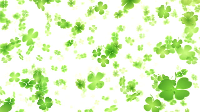 four leaf clover/shamrock (white) - loop - st. patrick's day stock videos and b-roll footage