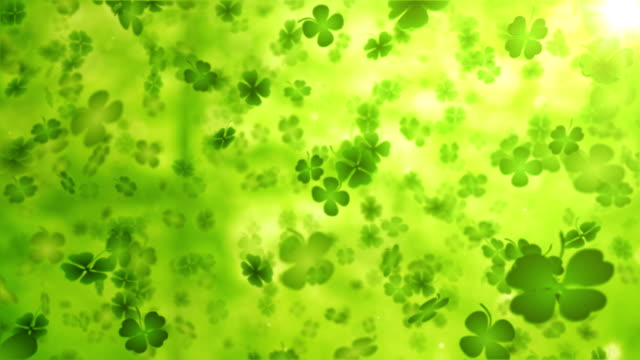 four leaf clover/shamrock (forest) - loop - st. patrick's day stock videos and b-roll footage