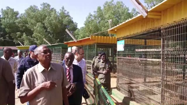 Four lion cubs given as a gift to Turkey's president from his Sudanese counterpart during a recent visit to Africa went on public display on January...