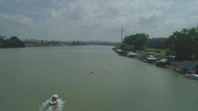 four male athletes sculling on lake in sunshine - sculling stock videos & royalty-free footage