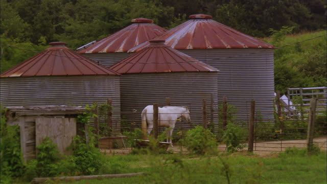 four metal corn cribs, one white horse - 少数の物点の映像素材/bロール