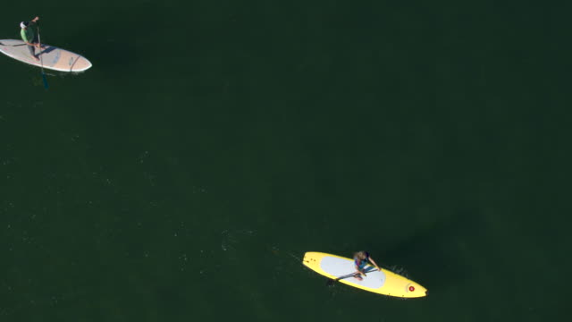 four people standup paddleboarding - using a paddle stock videos & royalty-free footage