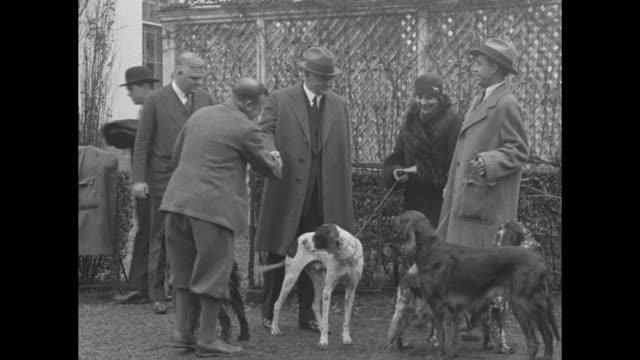 four pointers and setters on leashes, prize hunting dogs that have come to visit pres. herbert hoover / hoover and other men approach the dogs and... - rassehund stock-videos und b-roll-filmmaterial