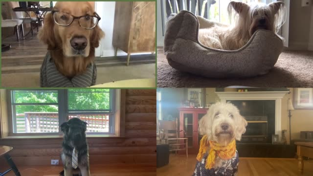 four professional dogs hold a meeting on video call - businesswear stock videos & royalty-free footage