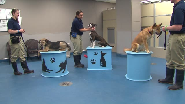 four rescue dogs have joined the team at the shedd aquarium to warm up the crowd and welcome visitors currently the dogs are being trained to be part... - shedd aquarium stock videos and b-roll footage