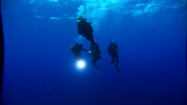 Four scuba divers swim near the surface of the Mediterranean Sea. Available in HD.