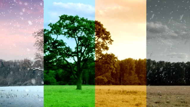 four seasons in one shot. hd - weather stock videos & royalty-free footage