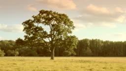 Four Seasons - loop. HD