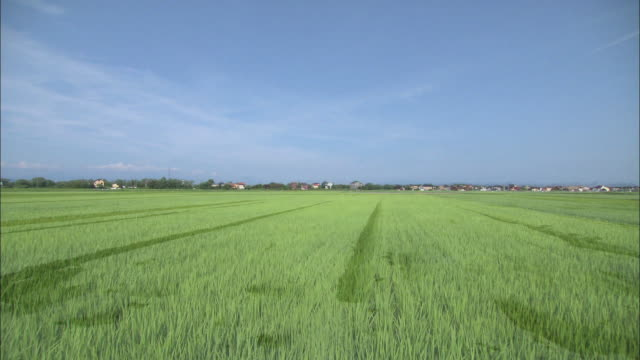 vídeos de stock, filmes e b-roll de four seasons of paddy field in harie village, shiga prefecture, japan - rice paddy