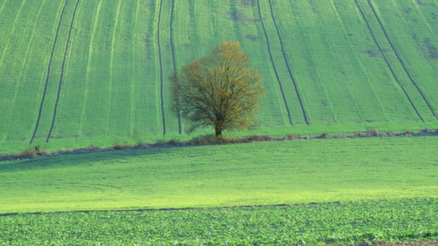 vídeos de stock e filmes b-roll de four seasons sequence, solitary willow tree in rural landscape between rolling hills - 30 segundos ou mais