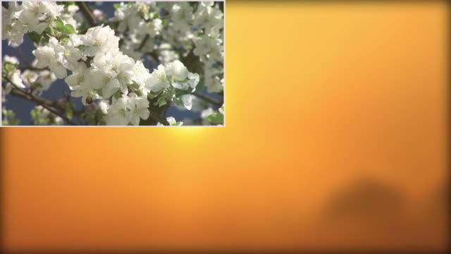 HD-MONTAGE: Vier Jahreszeiten