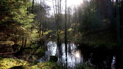 vídeos y material grabado en eventos de stock de four seasons  - estación entorno y ambiente