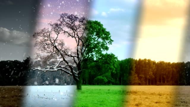 Four Seasons Weather - loop. HD