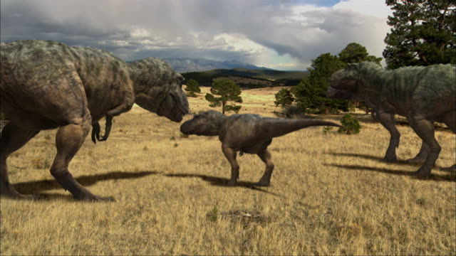 CGI, MS, CU, Four Tyrannosaurus rexes in field