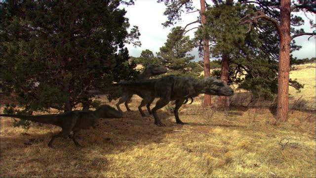 vídeos de stock e filmes b-roll de cgi, ms, four tyrannosaurus rexes walking in clearing - quatro animais