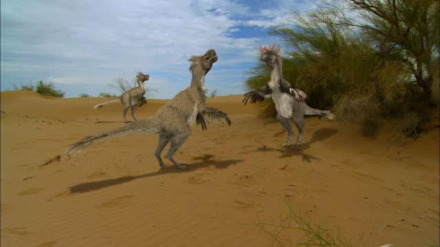 CGI, MS, Four Velociraptors on sand dune