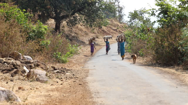 Four women in colorful clothing carrying long branches over their heads while going down a road within rural landscape in Nashik a region located in...