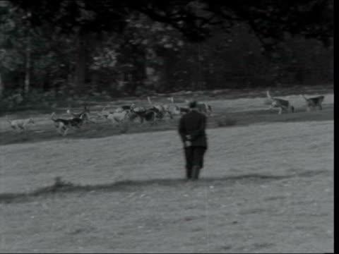 fox hunting season opens; england: ext various of mounted huntsmen taking drinks ahead of fox hunt pack of hunting dogs mounted hunters and dogs... - hunting stock videos & royalty-free footage