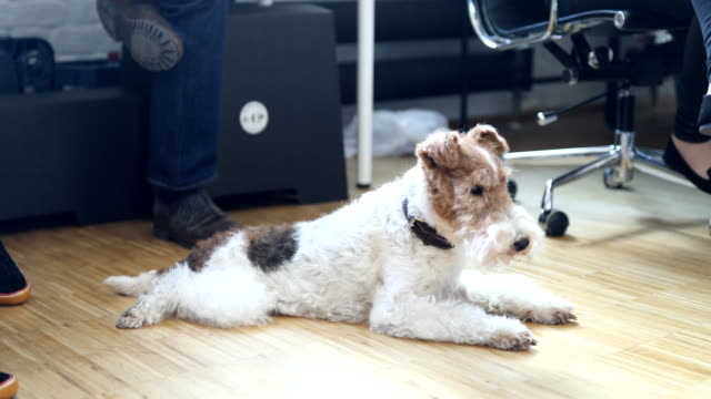 Fox terrier amidst professionals in office