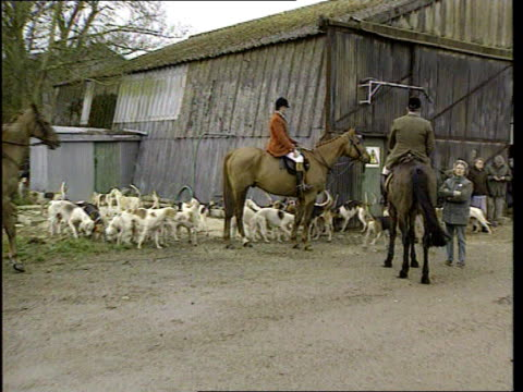foxhunting ban; lib england: ext hunt members on horseback with foxhounds around pull out foxhounds foxhounds down from lorry foxhounds across hunt... - foxhound stock videos & royalty-free footage