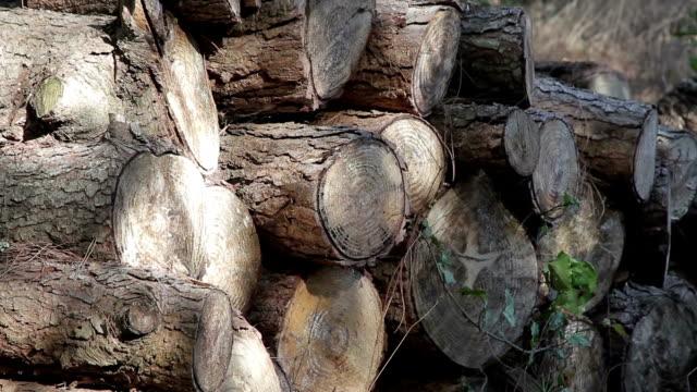 vídeos de stock, filmes e b-roll de foz arelho flor de planta - firewood
