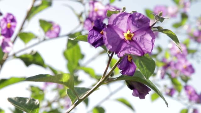 Foz do Arelho plant flower