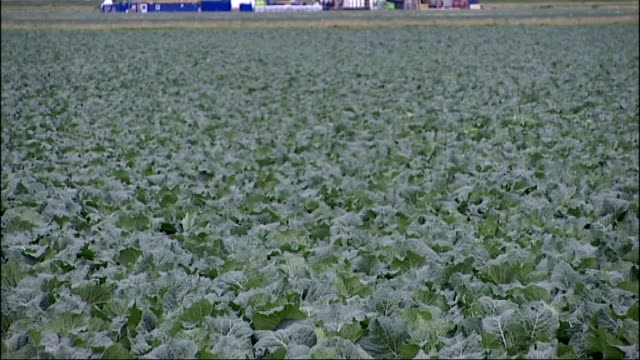 fracking given goahead by government lib ext cuadrilla fracking site seen beyond cabbage field - crucifers stock videos & royalty-free footage