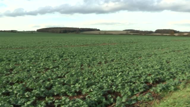 GVs Woodsetts proposed site and court injunction / protest GVs ENGLAND South Yorkshire EXT High Court Injunction poster / poster in farm crop field /...