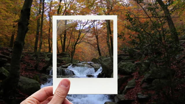 vidéos et rushes de framing stunning autumn forest and creek with polaroid picture from personal perspective. - personal perspective