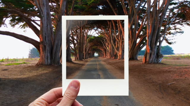 framing the cypress tunnel view in point reyes with instant print picture from personal perspective. - polaroid video stock e b–roll