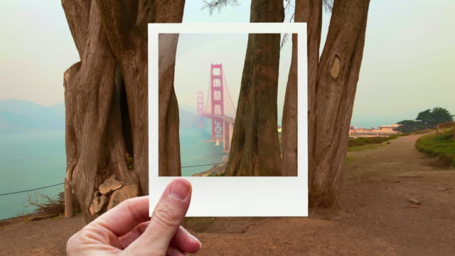 framing the golden gate bridge between trees with instant print picture from personal perspective. - polaroid video stock e b–roll
