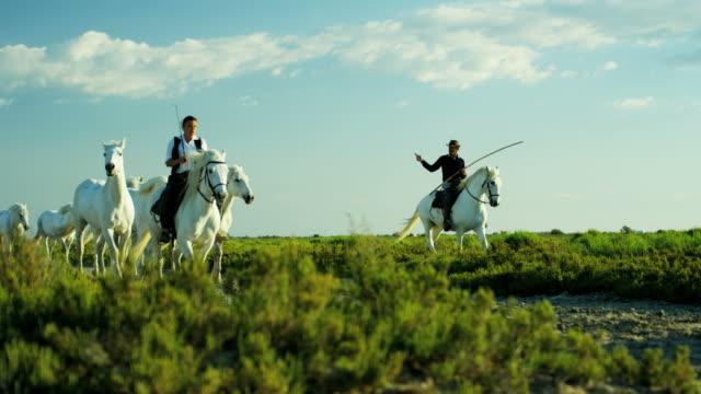 france camargue animal horse cowboy grass wetland freedom - cowboy stock-videos und b-roll-filmmaterial