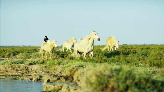 france camargue animal horse wild livestock rider cowboy - cowboy stock-videos und b-roll-filmmaterial